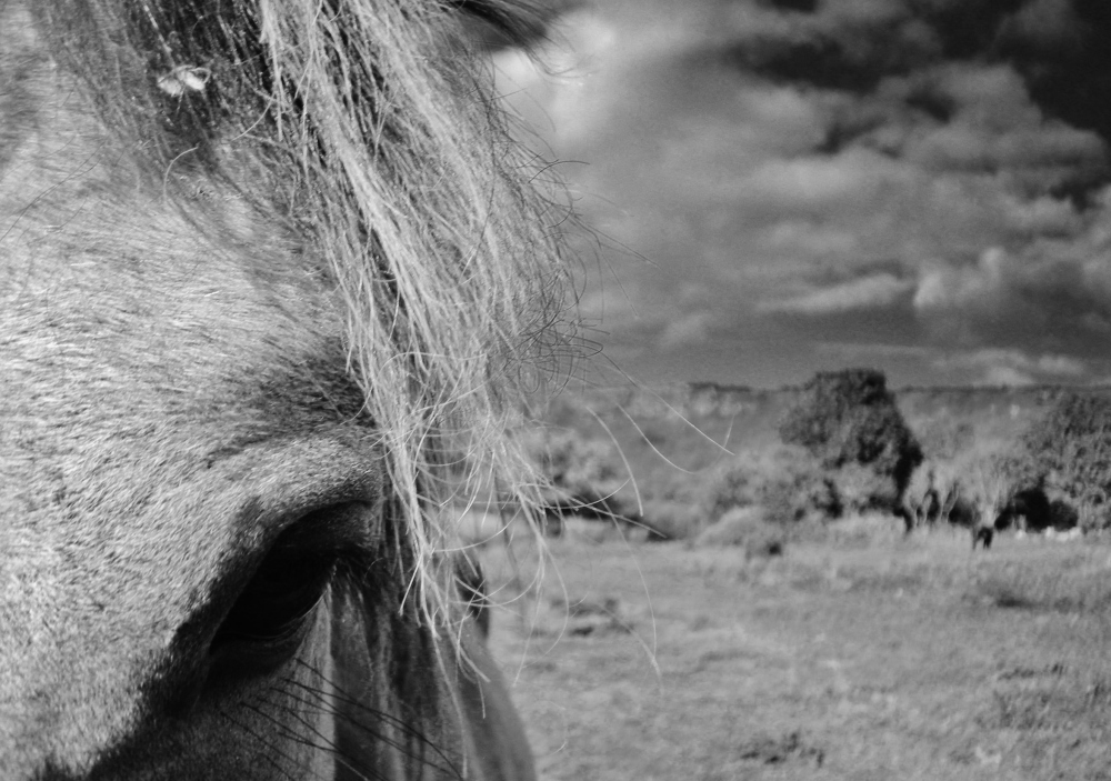 The calm eye of a horse