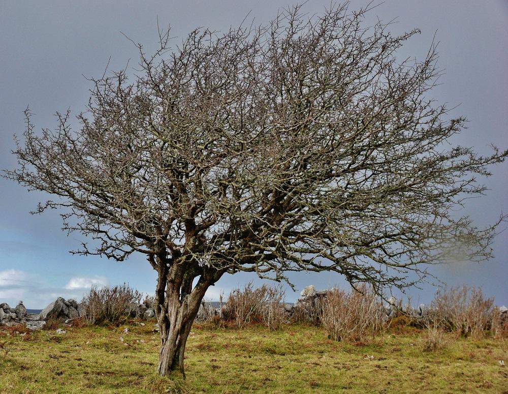 Fairy Tree IV