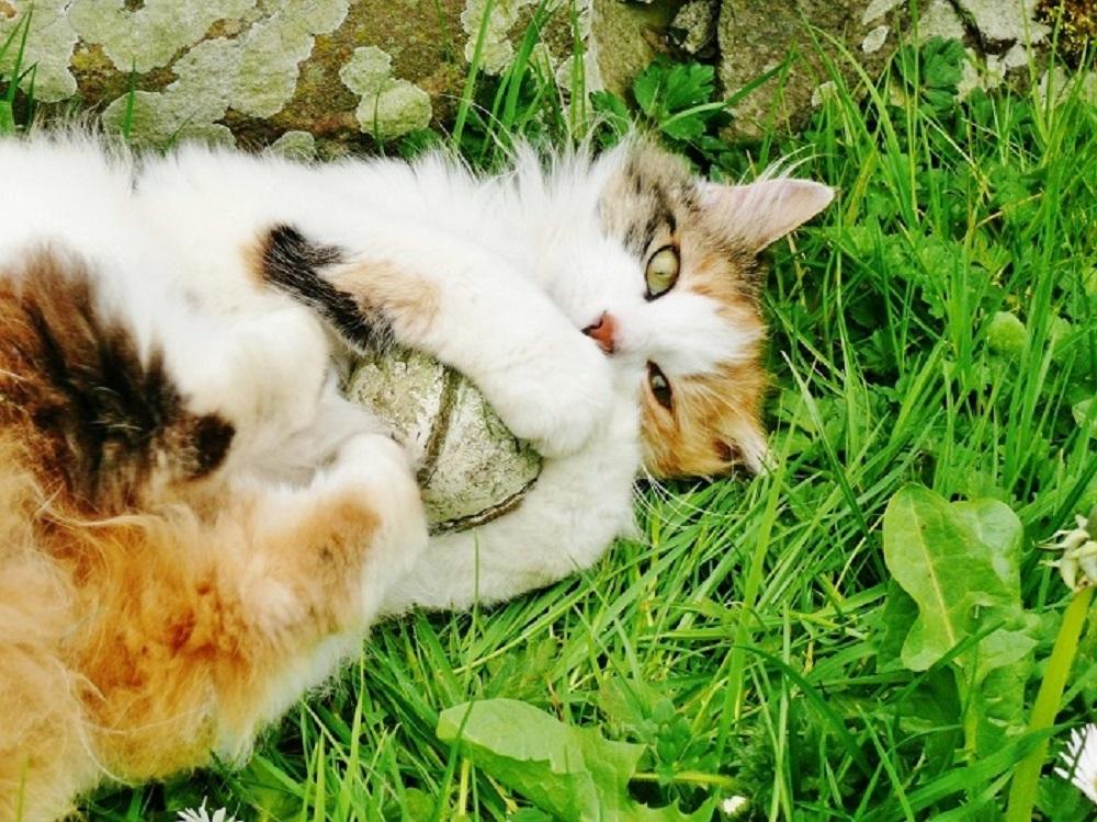 Nice Cat-ch!