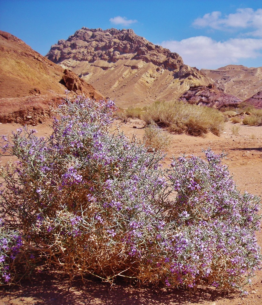 Spring in the desert