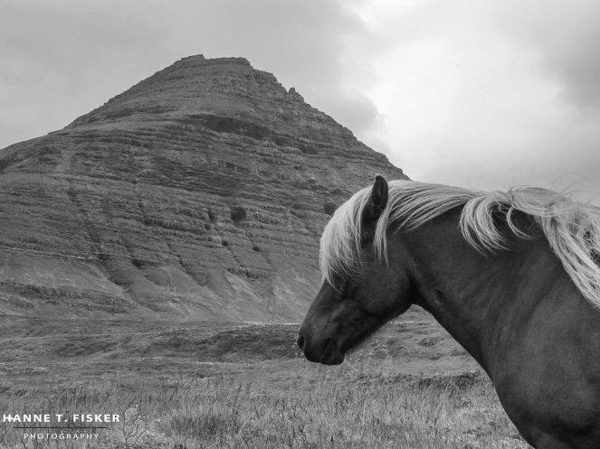 Icelandic Horses (5 of 5)