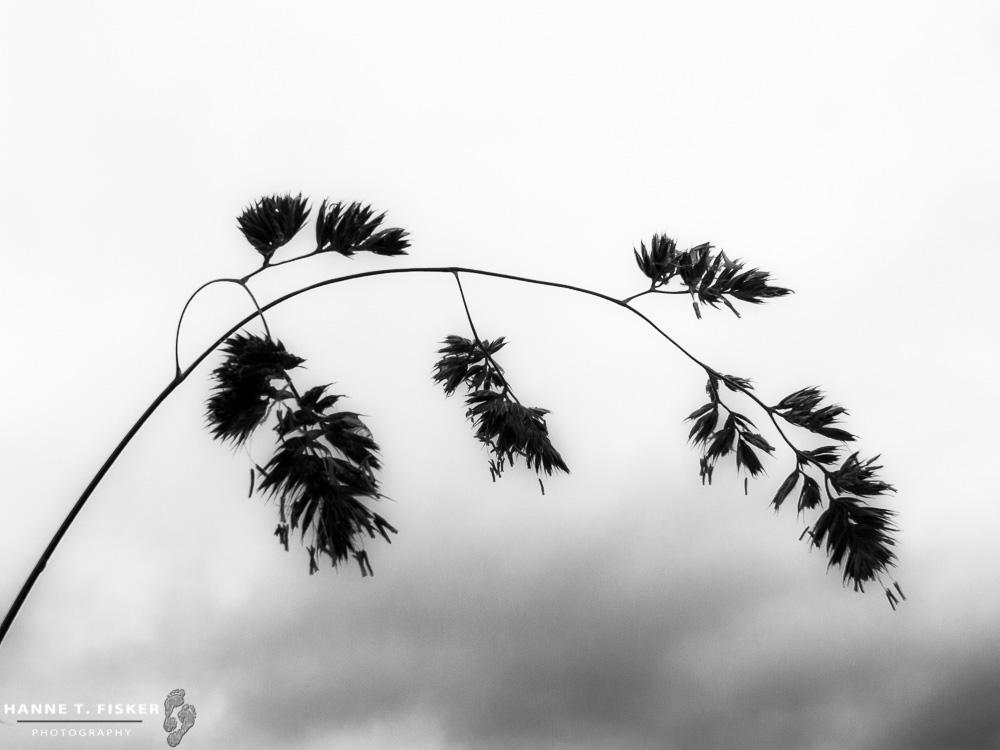 'Simplicity'