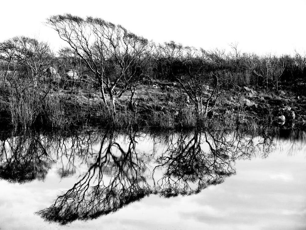 'Breathing Burren'