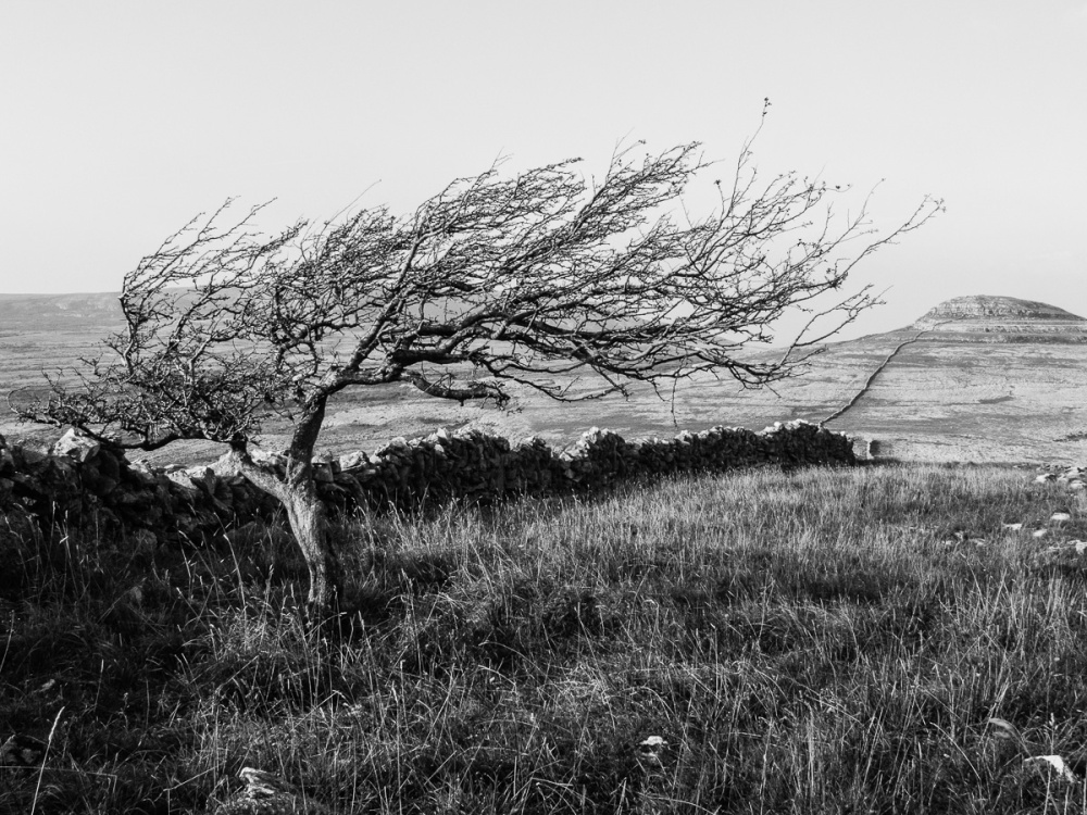 'Shaped By The Burren Wind'