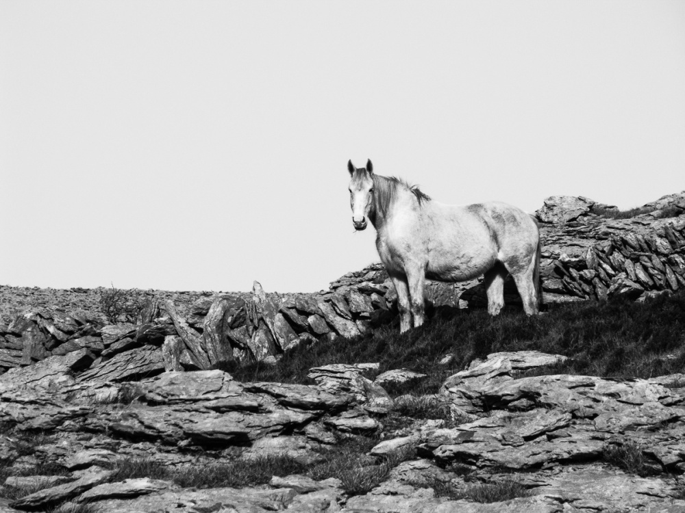 'White Horse At Black Head'
