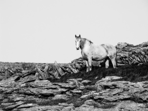 'White Horse At Black Head'