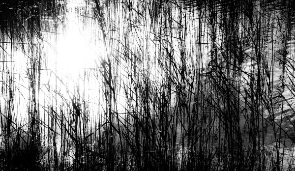 'Light In The Lake'