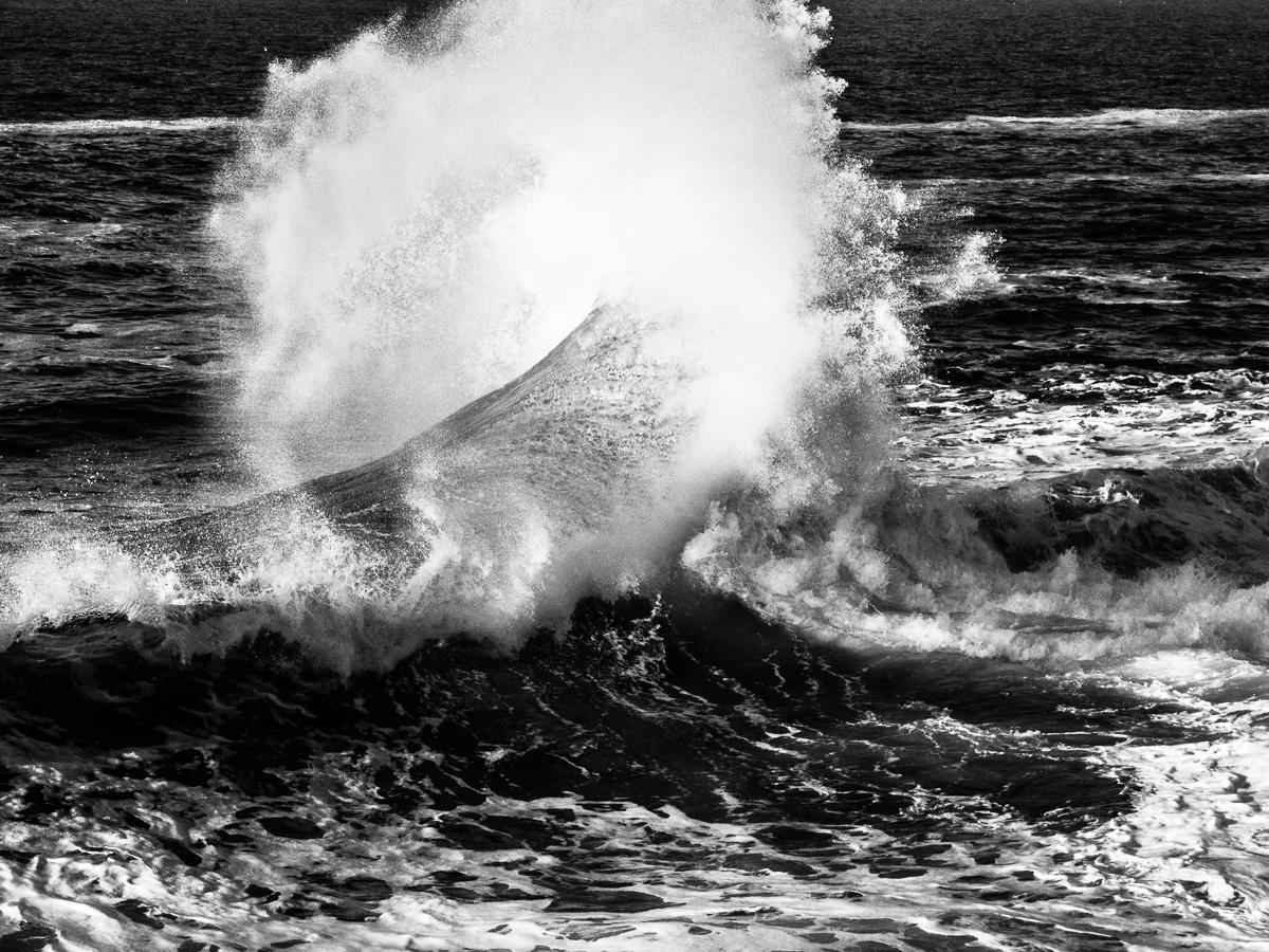 'Ocean's Wing'