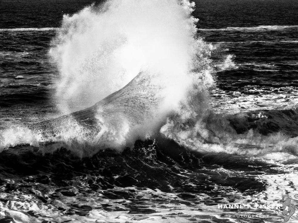 'Ocean Wing'