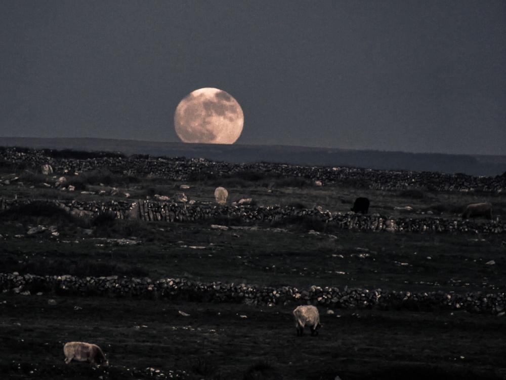 'Wolf Moon'